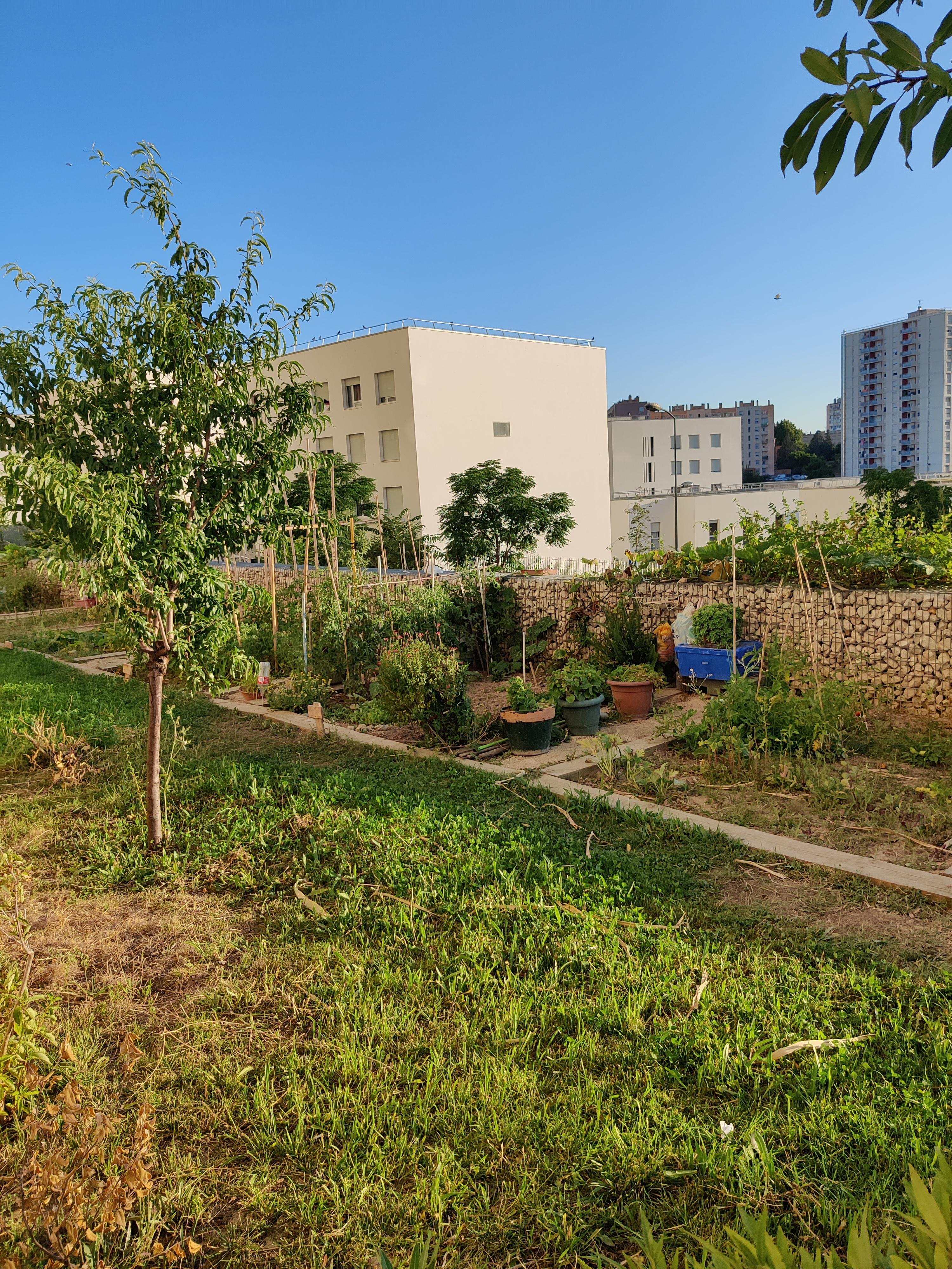 Jardins partagés Marseille quartiers Nord Massabielle